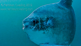 sunfish-trial-pic-from-video
