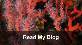 Kathleen Swalling's Blog