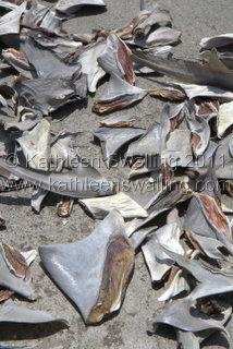 Shark fins, Dubai Fish Market